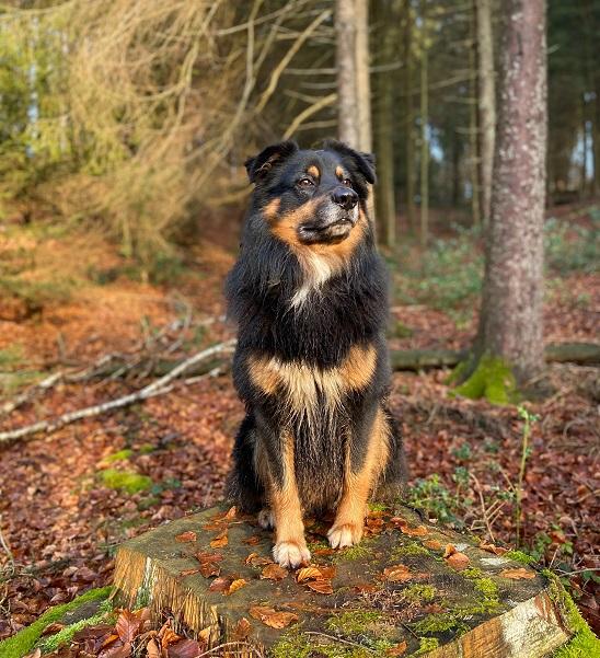 Urlaub mit Hund Koblenz